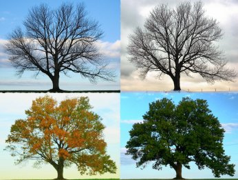 4 seasons trees