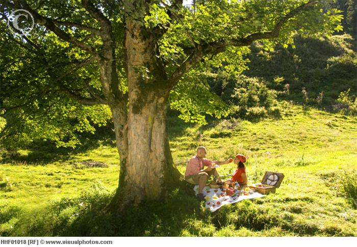 Picnic under tree