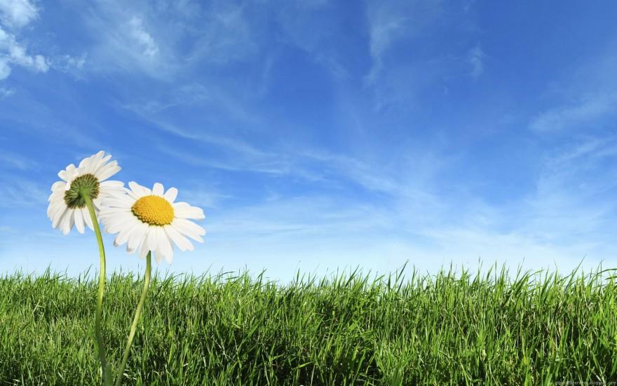 2 flowers in field